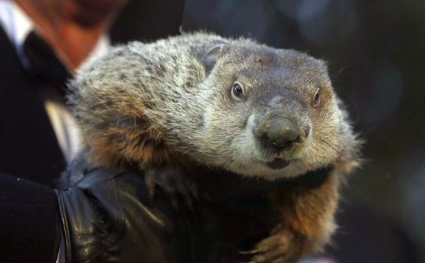 Marmota Phil teria errado previsão do tempo (Foto: Keith Srakocic/AP)