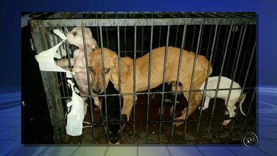 Responsável por suposta ONG com animais maltratados já havia sido multado em R$ 147 mil, diz polícia