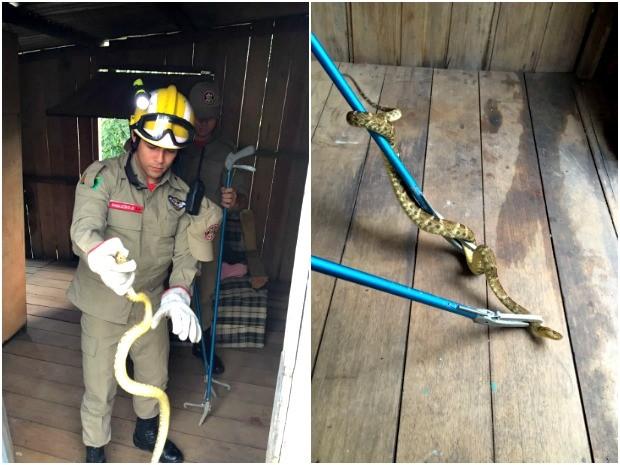 Animal foi encontrado na manhã desta quinta-feira (11) (Foto: Divulgação/Corpo de Bombeiros-AC)