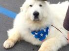O cão prefeito, o bode fuzileiro e outros animais com títulos e cargos de vida pública