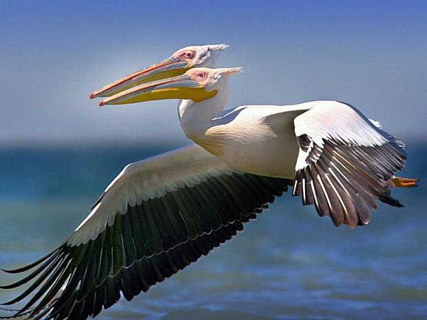 Image result for cabeças a voar