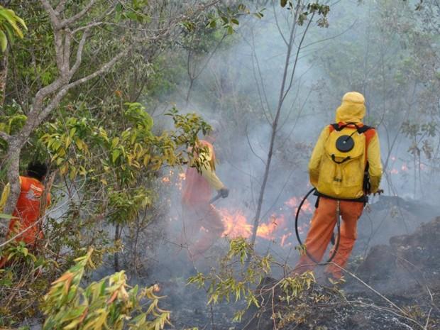 incêndio em pindobaçu (Foto: Jerônimo Alves Olimpio / Arquivo Pessoal)