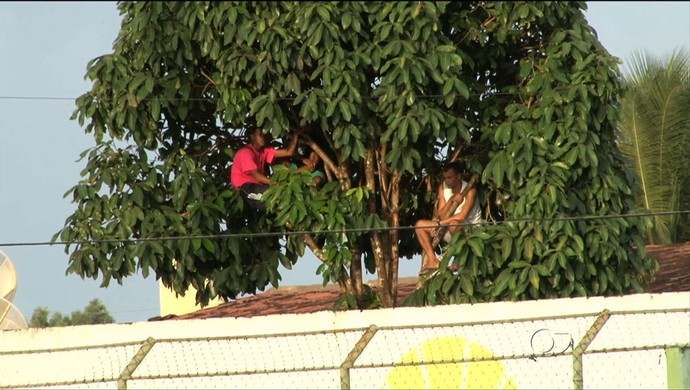 Torcedores assistem a partida entre Coruripe e CRB em cima de uma árvore (Foto: Reprodução/TV Gazeta)