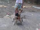 Mulheres furtam cachorra de casa  de São Carlos e família pede ajuda