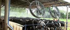 Pecuaristas cuidam para  que gado não sinta calor (Reprodução/TV TEM)