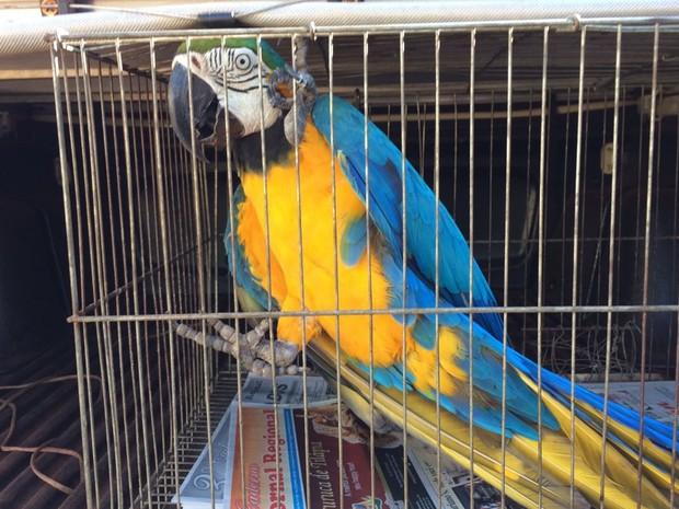 Aves apreendidas foram levadas ao zoológico de Ilha Solteira  (Foto: Divulgação/Polícia Civil)