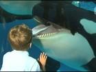 Após polêmica, SeaWorld encerrará show 'teatral' com orcas em San Diego