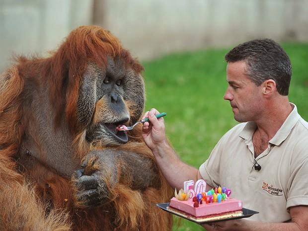 Orangotango (Foto: Alain Jocard/AFP)