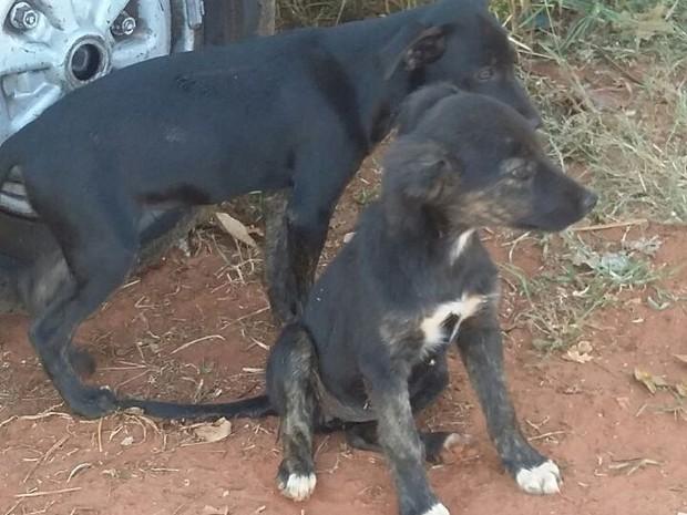 Cães seriam deixados em um centro de reciclagem  (Foto: Divulgação/ ONG Patinhas Carentes )