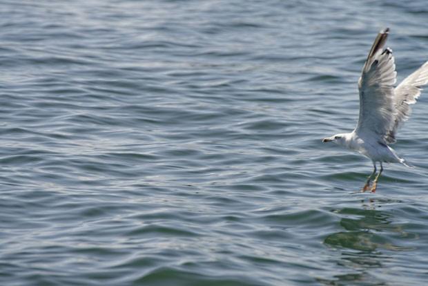 Mais de 150 espécies de aves podem ser vista na ilha francesa (Foto: Alexandre Dollque/Creative Commons)
