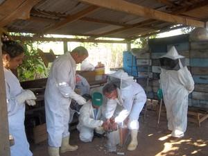 Cursistas também aprenderam extração do mel (Foto: Divulgação/Emater-Rio)