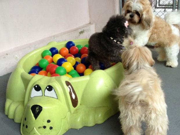 Na creche, animais de estimação ficam em um espaço com brinquedos, como piscina de bolinhas e escorregador, e uma televisão (Foto: Thais Kaniak / G1 PR)