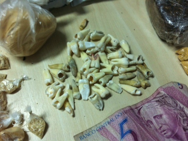 Dentes apreendidos durante operação policial, em Manaus (Foto: Ana Graziela Maia/G1 AM)