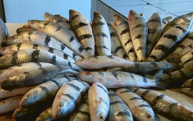 Peixe faz parte da alimentação dos amazonenses (Foto: Amazonas TV )