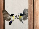 Lista traz ave atacando reflexo e mais cenas de animais diante do 'espelho'