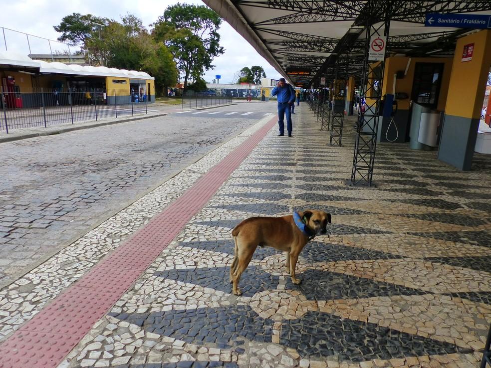 Cuidadora conta que já viu várias situações de maus tratos no terminal de ônibus  (Foto: Adriana Justi/G1)