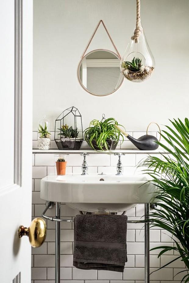 7 plantas para ter no banheiro casa e jardim paisagismo. Black Bedroom Furniture Sets. Home Design Ideas