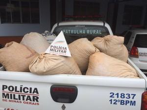 Café é furtado em Piuhmi  (Foto: Polícia Militar/Divulgação)