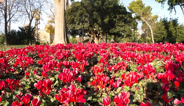 Jardim Botnico (Foto: Divulgao)