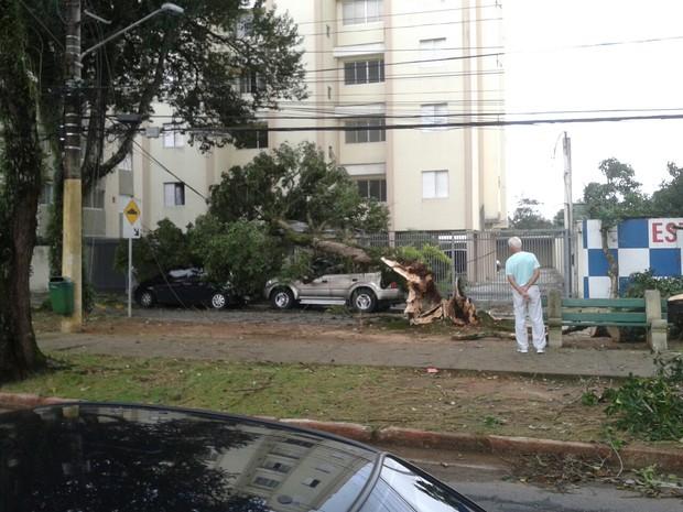 Árvore cai e atinge dois carros na avenida Tivoli, em São José (Foto: Daniel Fernandes/ Vanguarda Repórter)