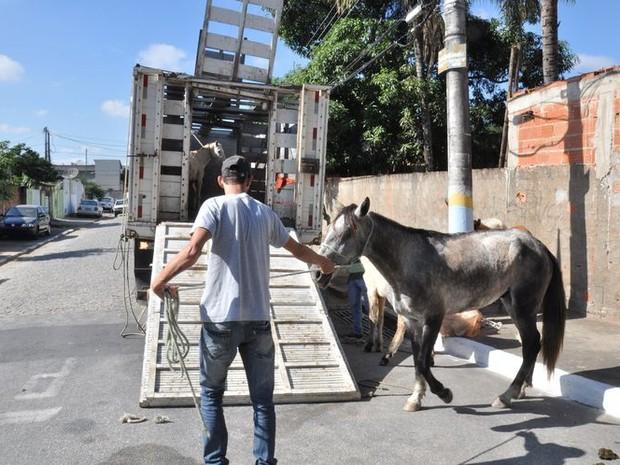 Animais recolhidos recebem vacina e fazem exames de saúde (Foto: Divulgação/ ASCOM)
