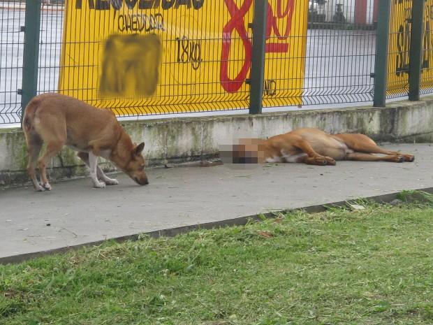 Cão não deixa o companheiro sozinho em Santos, SP (Foto: João Paulo de Castro / G1)