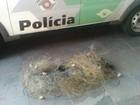 Polícia Ambiental apreende rede de pesca irregular no Rio Paraná