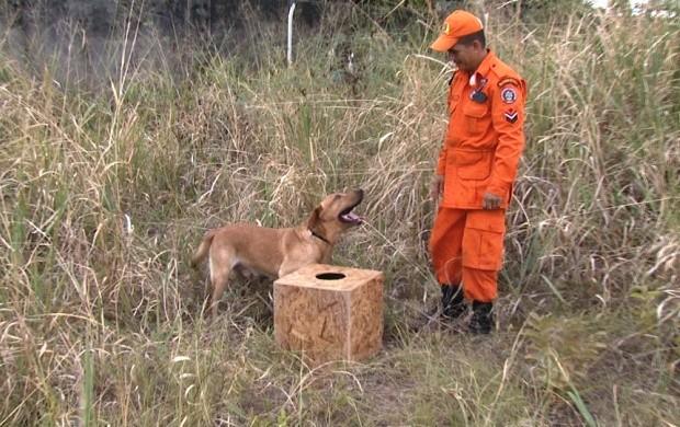 Cães passam por treinamento para ajudar nos trabalhos de resgate (Foto: Bom Dia Amazônia)