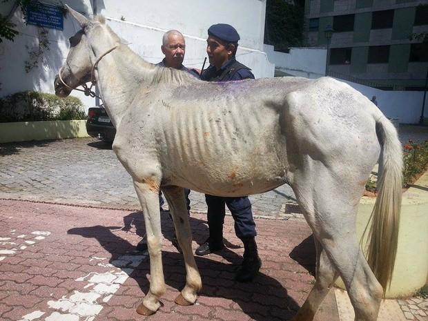 Cavalos são apreendidos vagando pelo Centro de Petrópolis (Foto: Fernanda Soares/G1)