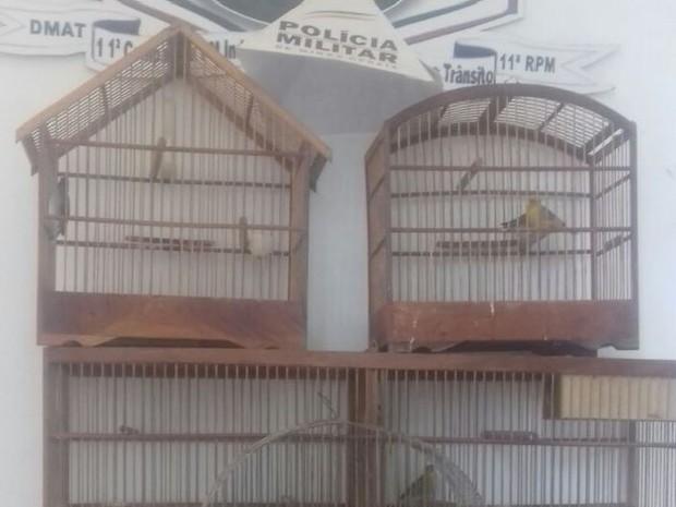 Aves foram levadas para o Cetas, em Montes Claros (Foto: Polícia Militar/Divulgação)
