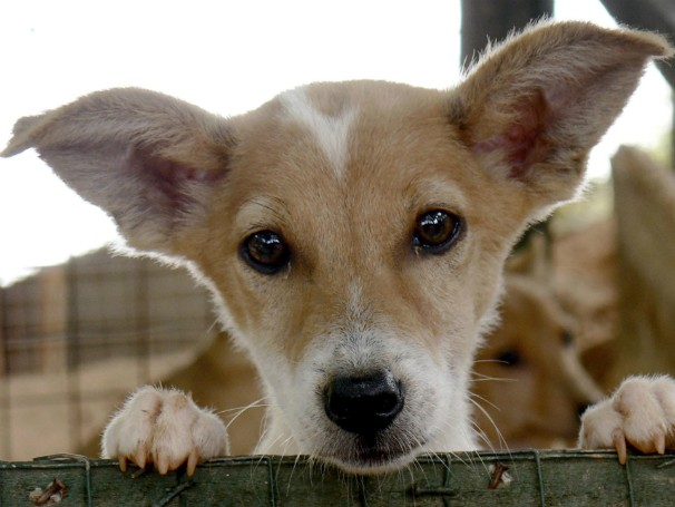 Dia Mundial dos Animais (Foto: Divulgação/WSPA)