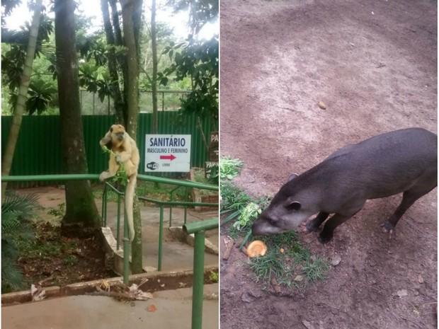 Animais estão sendo alimentoados por doações de moradores (Foto: Mis Souza/VC no G1)