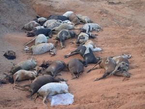 Órgãos ambientais vão avaliar se houve contaminação do solo (Foto: Guaraí Notícias/Divulgação)