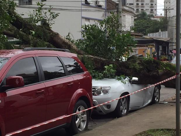 Árvore cai em cima de carro e destrói o veículo em Santos (Foto: Rosana Valle / G1)