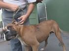 Abandono de cães e gatos aumenta 30% em São Carlos e Araraquara, SP