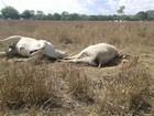 Raio provoca a morte de animais no sul do Tocantins