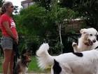 Moradora do Recreio teve cães ameaçados onde menor foi violentada