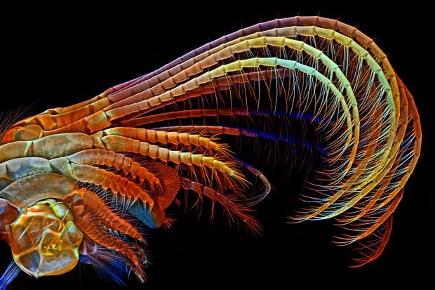 Apêndices usados pela craca, um tipo de crustáceo, para captar plâncton e outros alimentos para dentro da concha (Foto:  Igor Siwanowicz/3º lugar no 2014 Olympus BioScapes Digital Imaging Competition/ www.OlympusBioScapes.com)