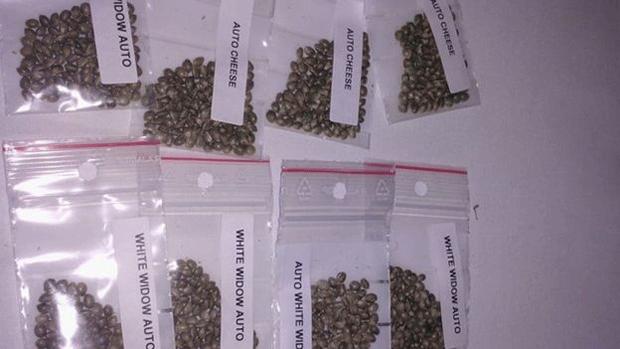 Foto de sementes de maconha separadas por espécie publicada no Facebook por THC Procê (Foto: Reprodução/Facebook)