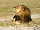 Dono da fazenda onde mataram o leão Cecil comparece à justiça