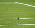 Passarinho na grama, champanhe com morango, beijo de Sharapova: o 1º dia de Wimbledon