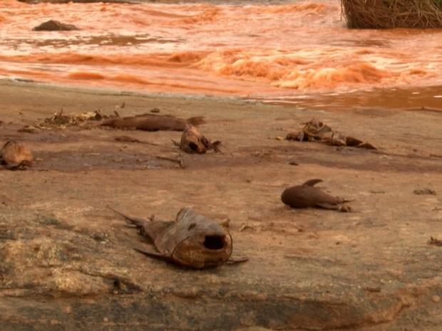 Rio Doce foi atingido por lama de barragem (Foto: Reprodução)