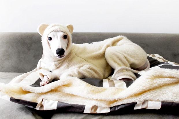 11 achados que todo apaixonado por pets precisa conhecer (Foto: Divulgação)