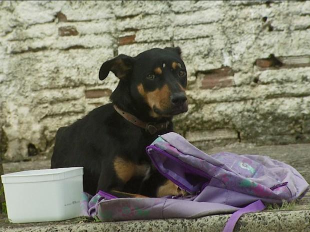 Um cachorro foi deixado junto com uma mochila em Campinas (SP) (Foto: Reprodução EPTV)