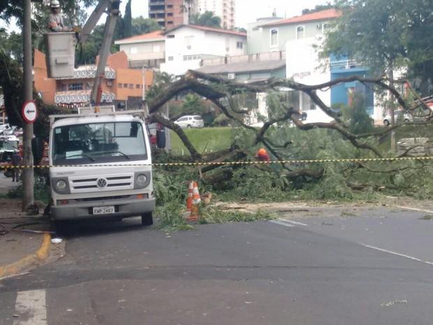 Árvore cai na Avenida Armando de Salles Oliveira, em Piracicaba (Foto: André Abreu/Arquivo pessoal)