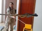Bombeiros resgatam serpente de 2 metros de dentro de fogão em Vilhena