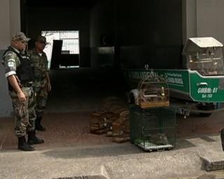 Fiscais realizam ação contra a caça de animais silvestres em Barra Mansa (Foto: Reprodução Bom Dia Rio)