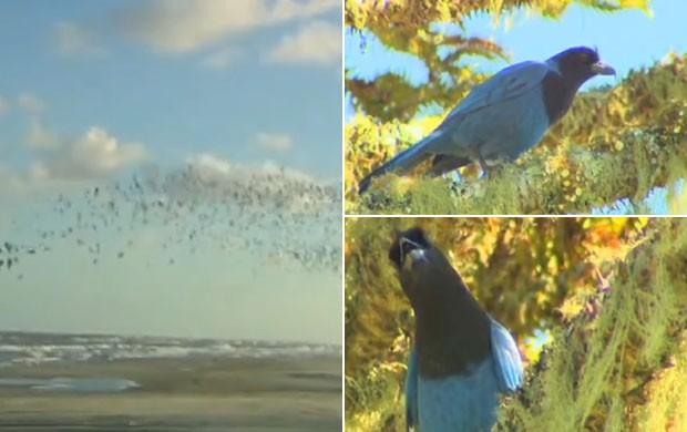 Rio Grande do Sul tem mais de 600 espécies de aves (Foto: Reprodução/RBSTV)