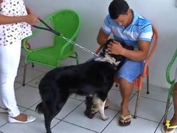 Animal está internado em clínica veterinária de Rondonópolis (Foto: Reprodução/ TVCA)