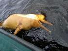 Boto é encontrado morto próximo a porto na Zona Sul de Manaus